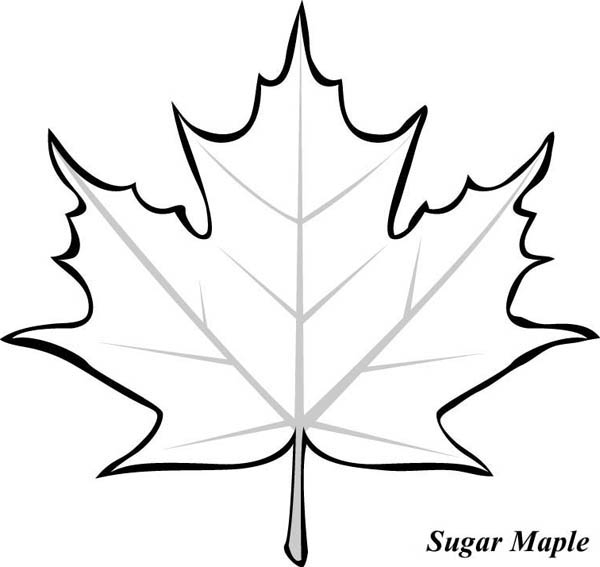 Canada Maple Leaf Template Printable ClipArt Best